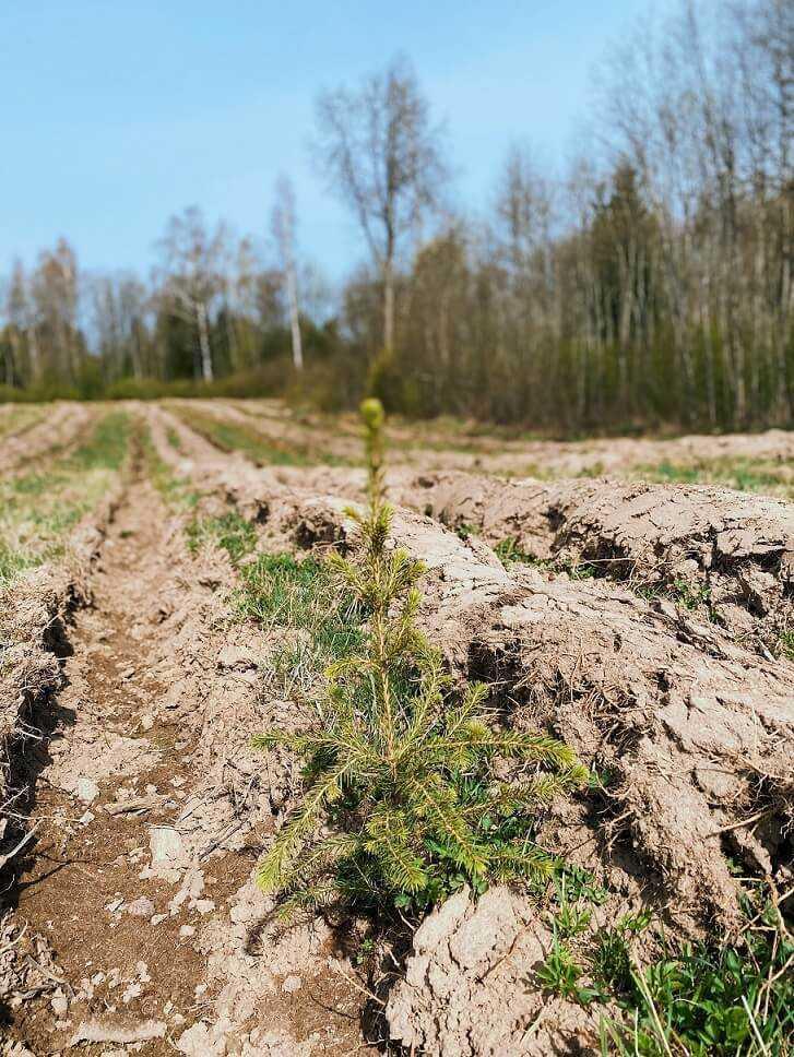 Bolt uzsāk Zaļā plāna īstenošanu, iestādot 5000 kokus Latvijā