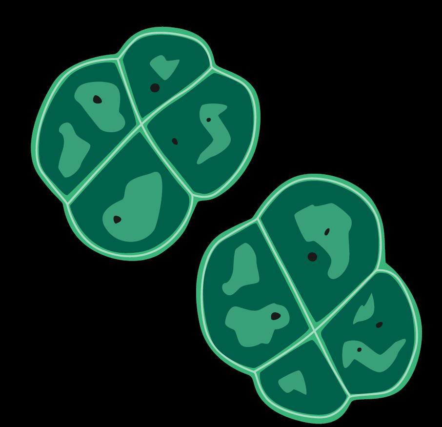 Iepazīstieties - Deinococcus radiodurans