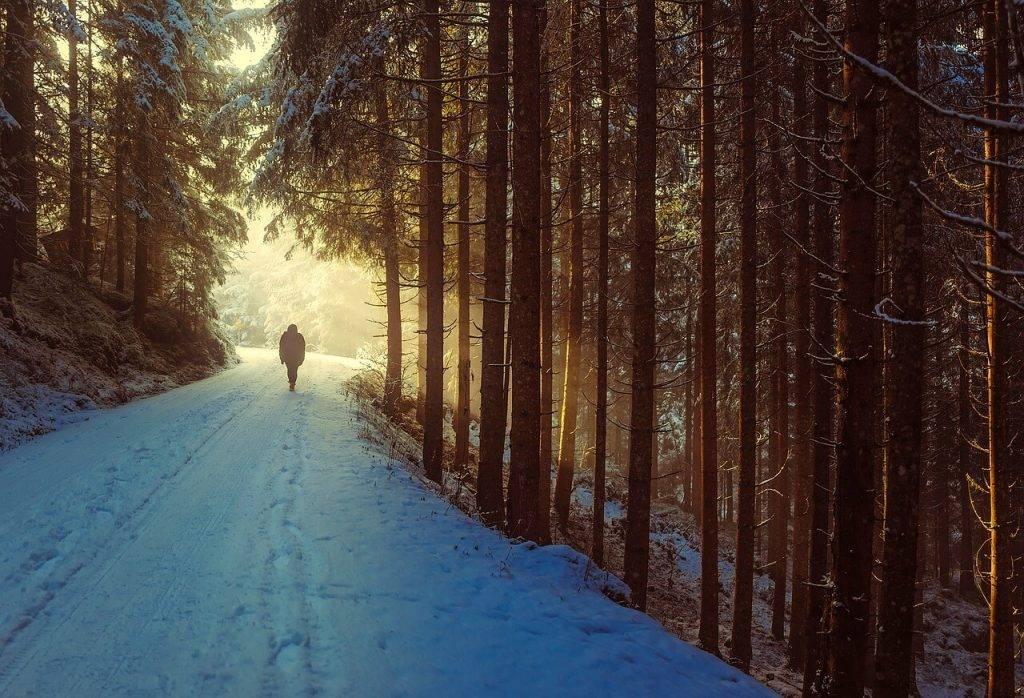 Izveidota digitāla karte pastaigām Rīgas mežos