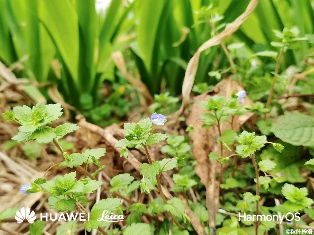Huawei P50 fotogrāfijas